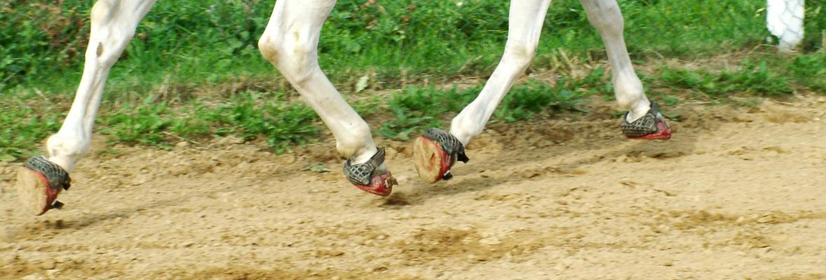 Boty pro koně Renegade